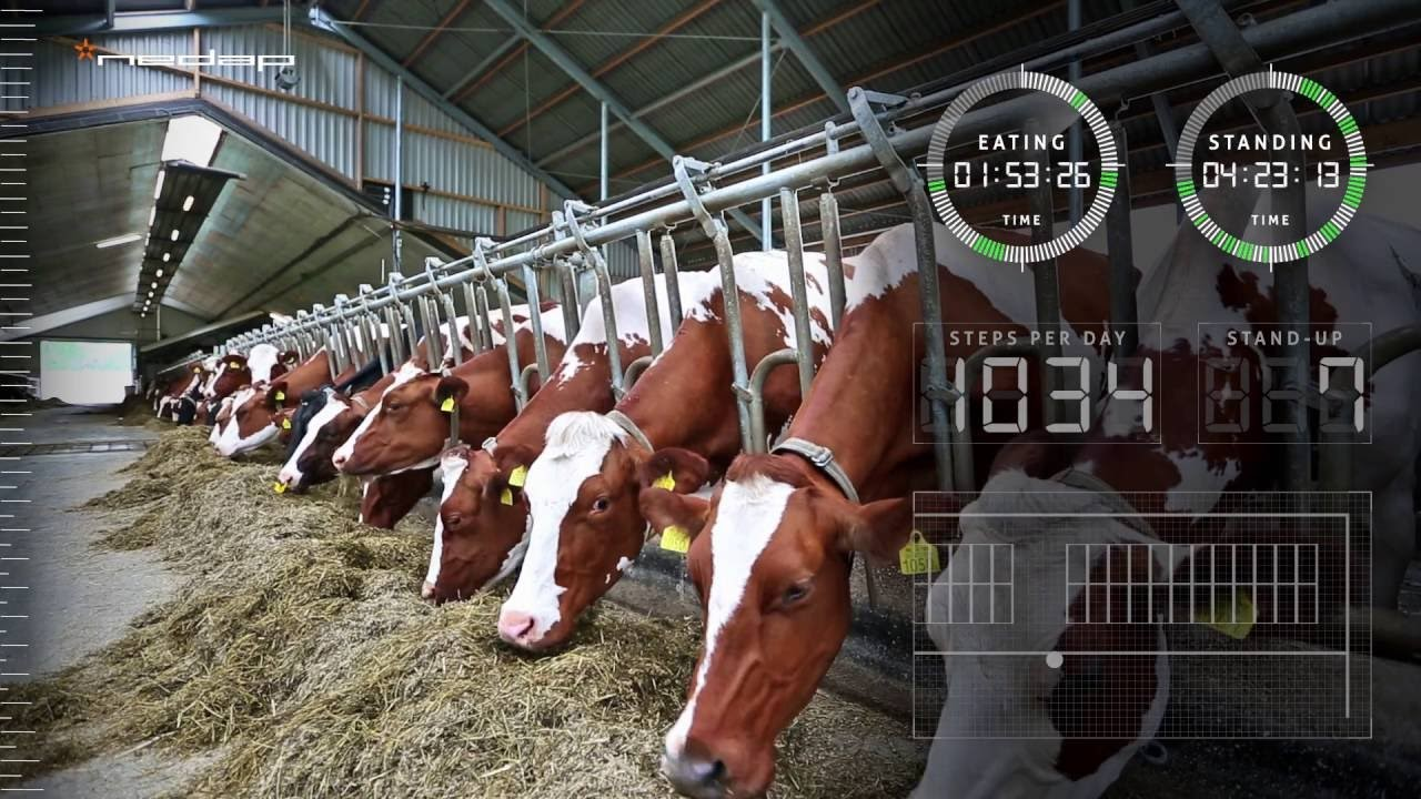 Future Friday: Farming AR to Revolutionize Agriculture